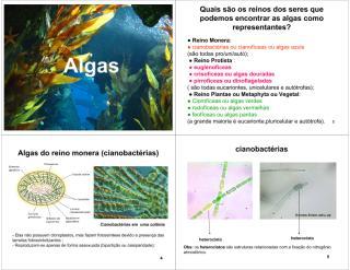 Algas EF.pdf