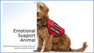 Emotional Support Animal.ppt